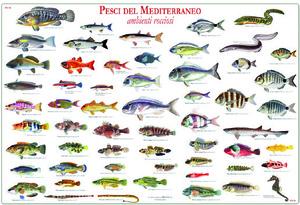 Vocabolario etimologico degli animali marini – A cura di