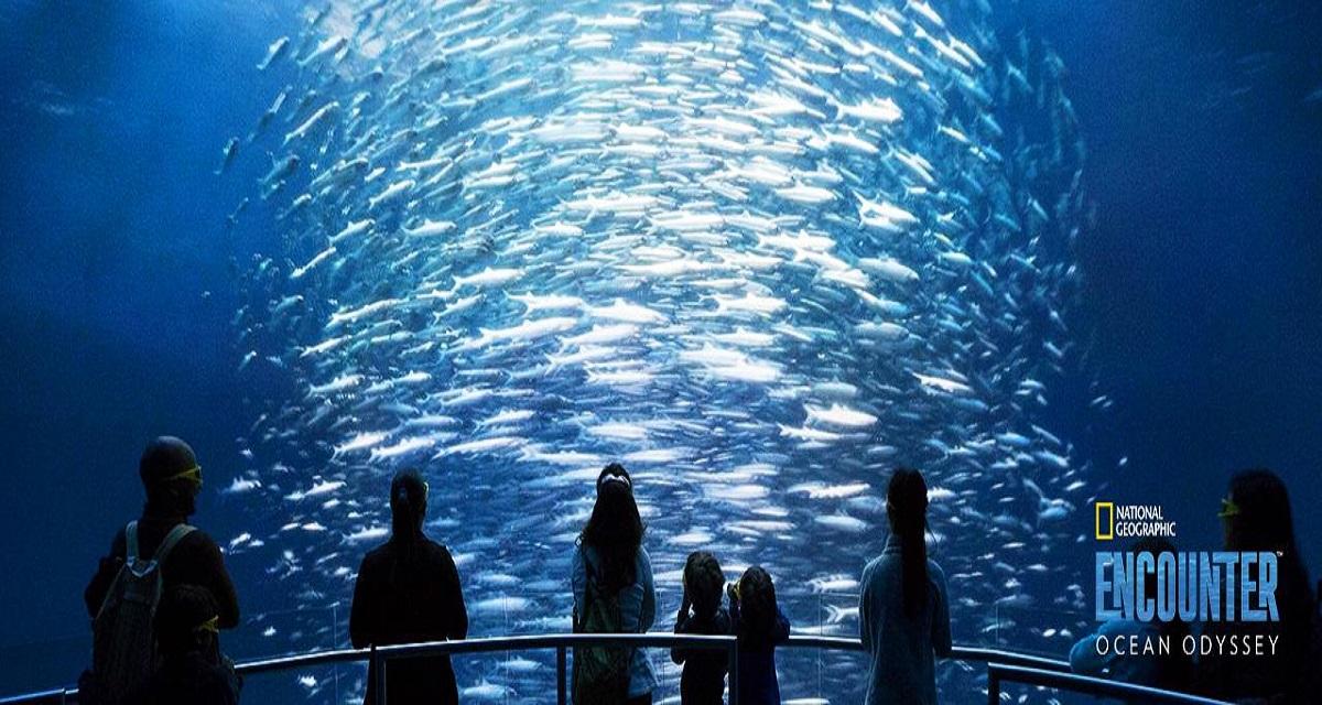 Ocean Odyssey , un acquario senza pesci straordinario esempio di tutela ambientale