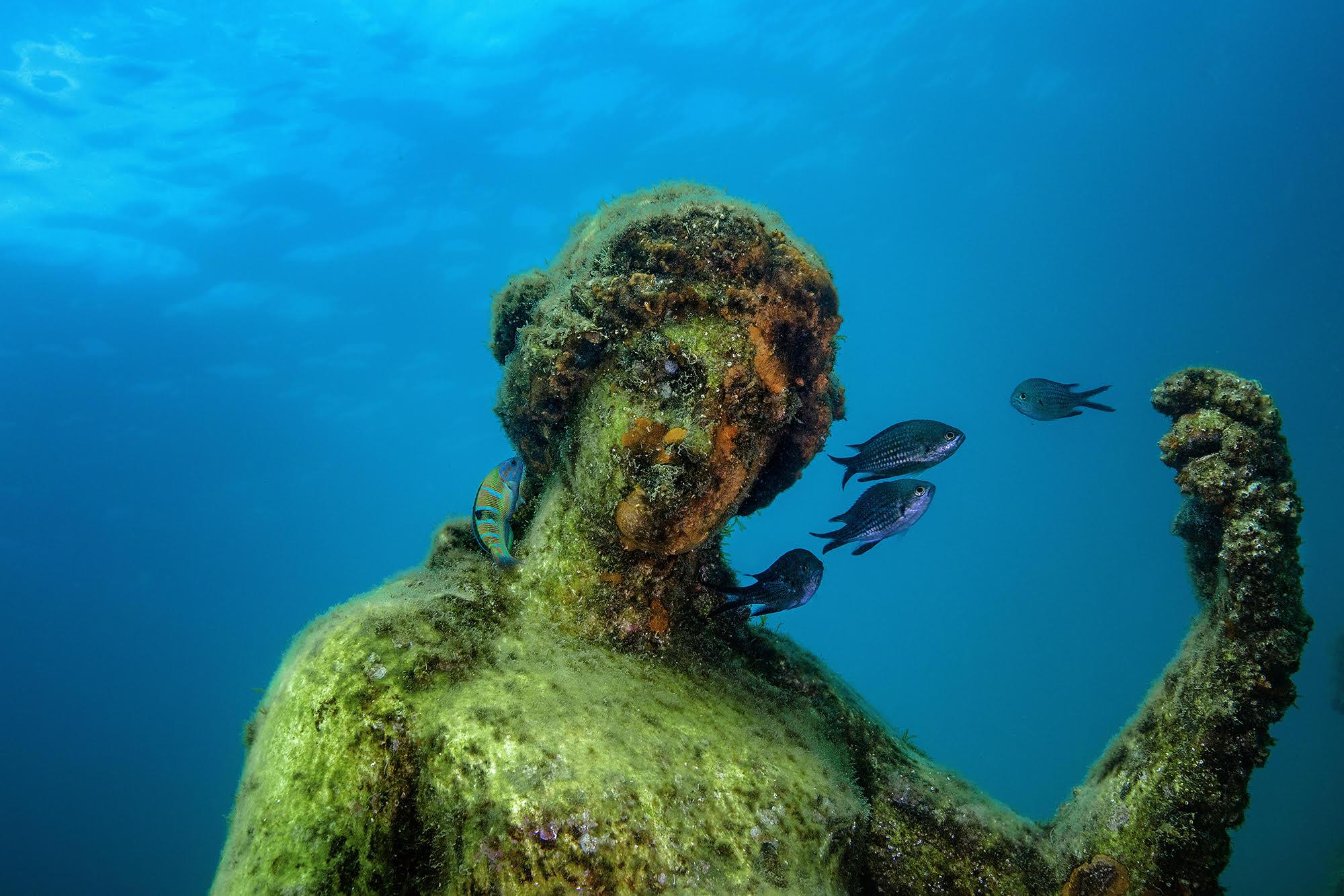 Subscatti, mostra di fotografia subacquea dal 10 al 14 novembre ingresso gratuito