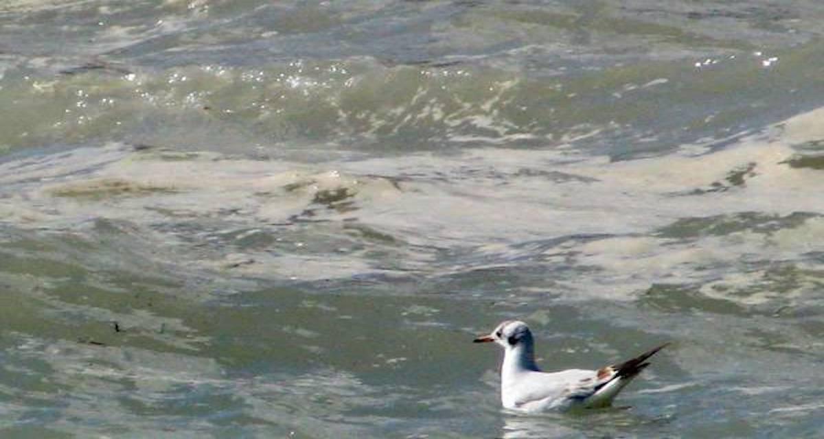 Mare Campania: la procura apre un inchiesta per disastro ambientale