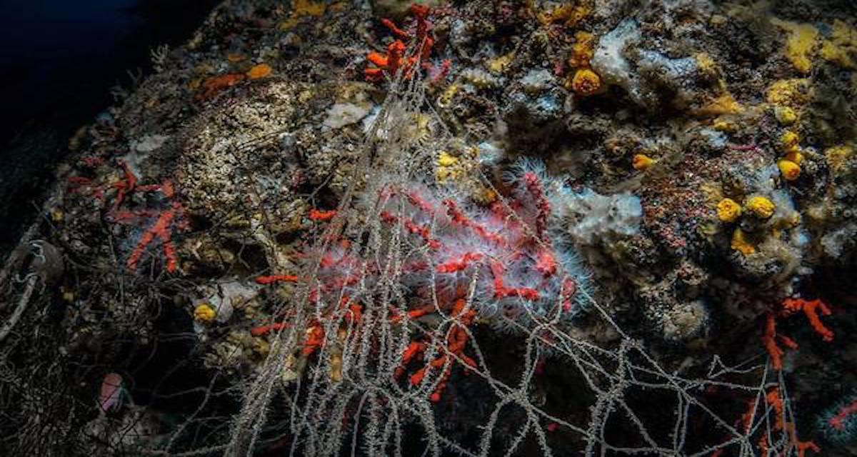 Scippati 400 kg di corallo dai fondali marini, ma quanto costa la prevenzione?