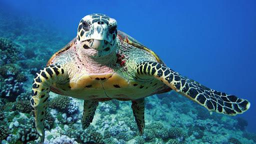 """IdeAmbiente : 6 marzo a Vietri sul Mare """"Strategie per la tutela del mare"""""""